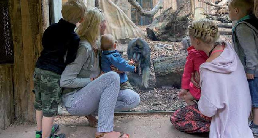 Ritterschlag für unseren Zoo