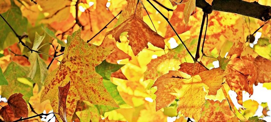 Herbstbastelei